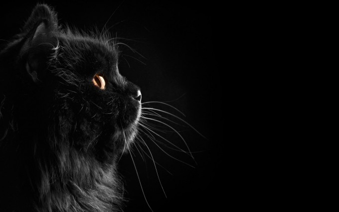 black cat download