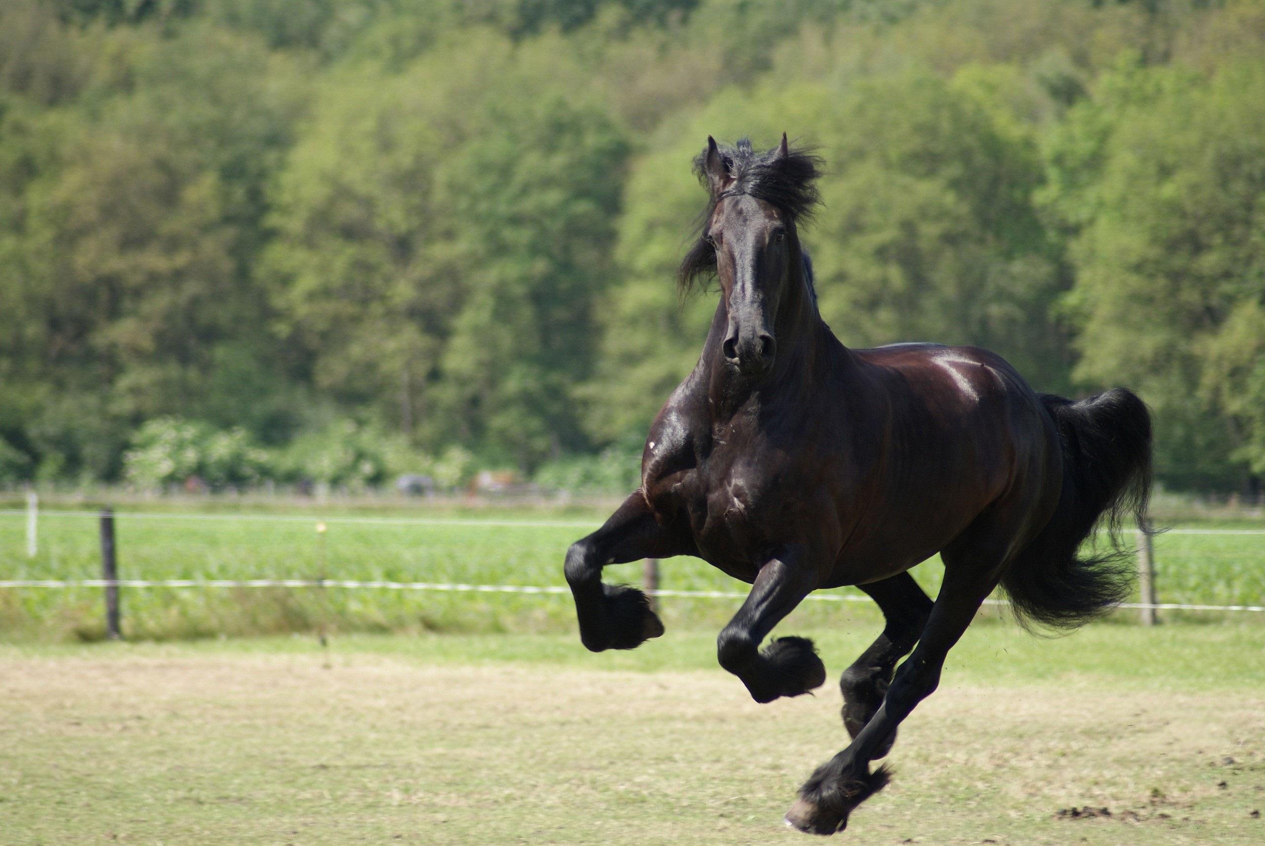 Black Horse A12 - Hd Desktop Wallpapers  4K Hd-3004