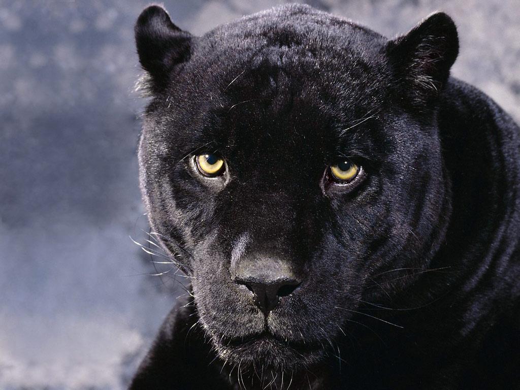 black panther look