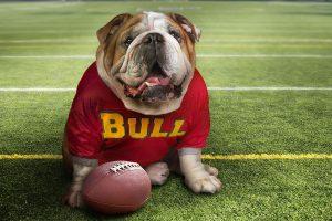 bulldog wallpapers hd