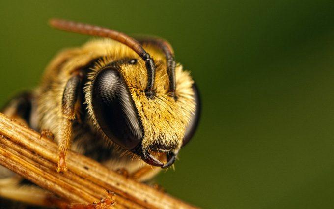 bumble bee wallpaper hd