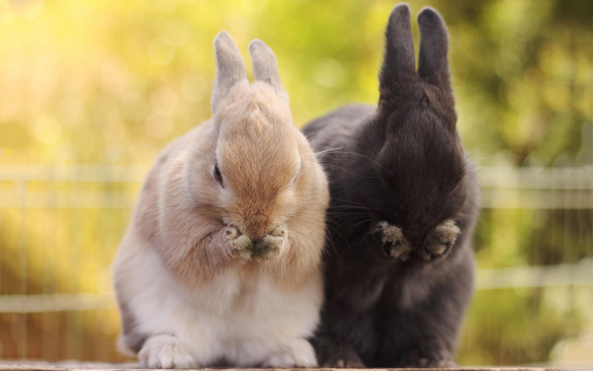 bunnies pictures