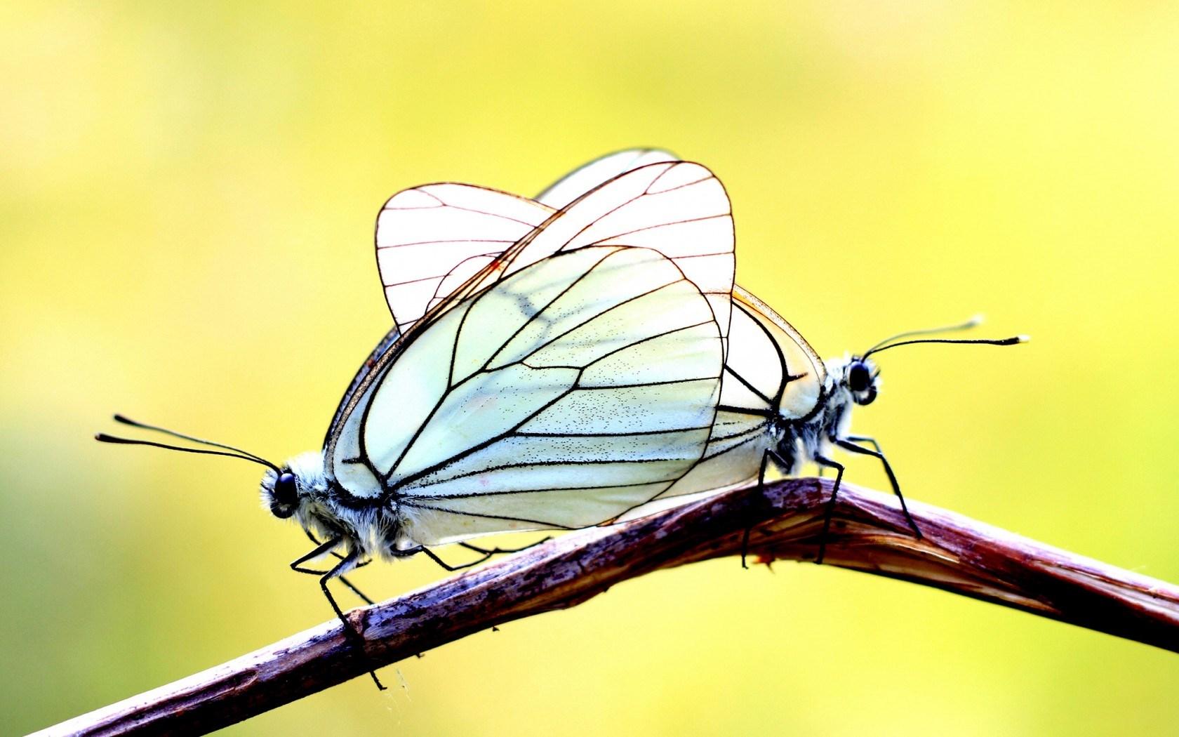 butterflies cute wallpaper