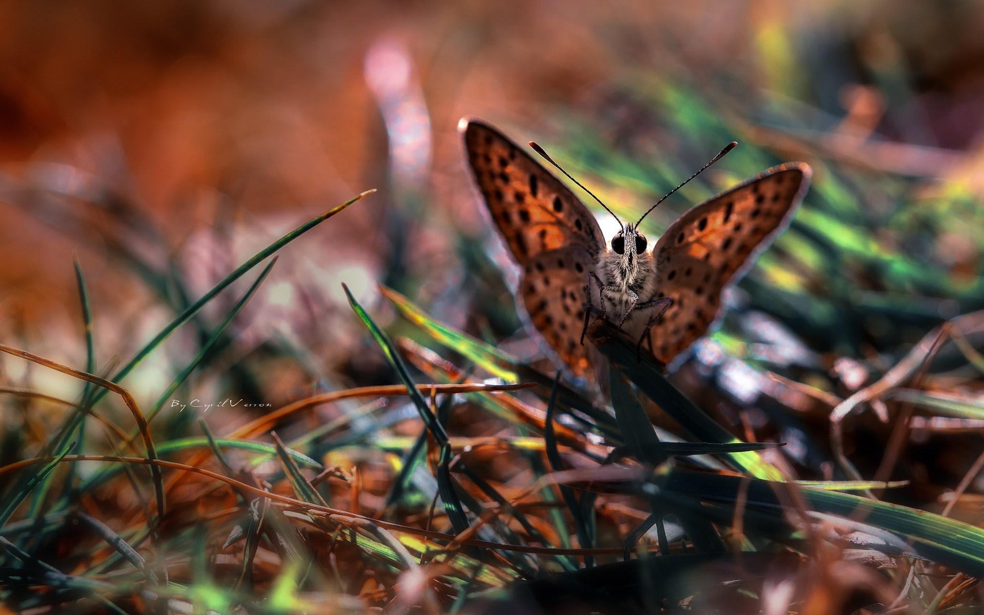 butterflies wallpaper pictures