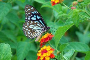 butterfly desktop wallpaper hd free download