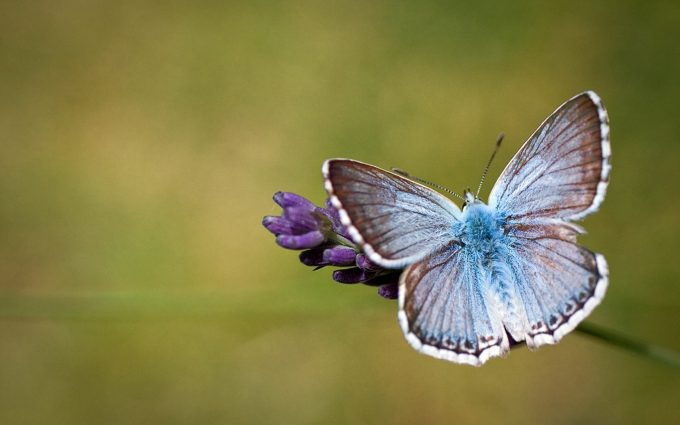 butterfly image free