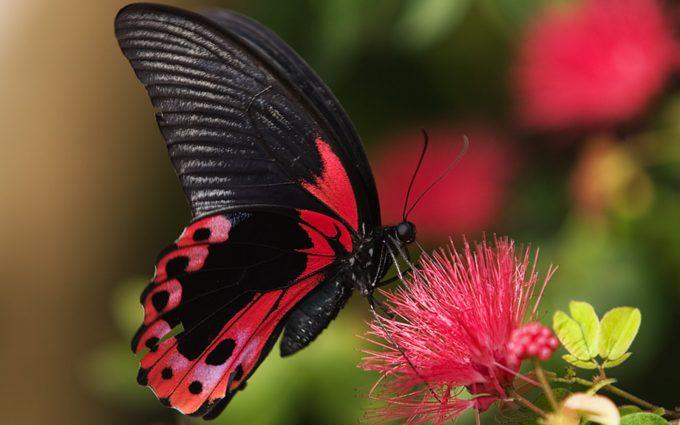 butterfly live wallpaper download - HD Desktop Wallpapers ...