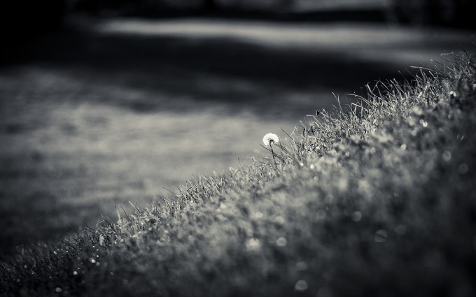 bw wallpapers hd