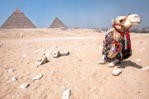 camel wallpapers