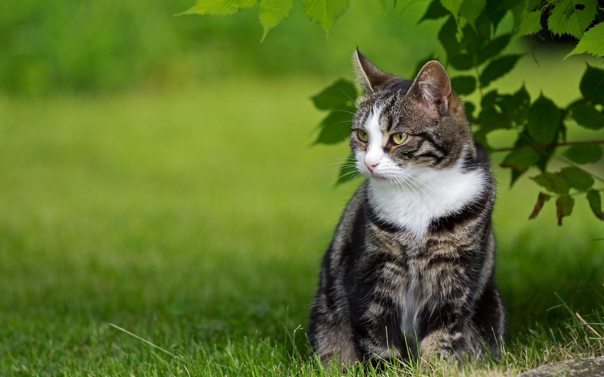 cat 1080p