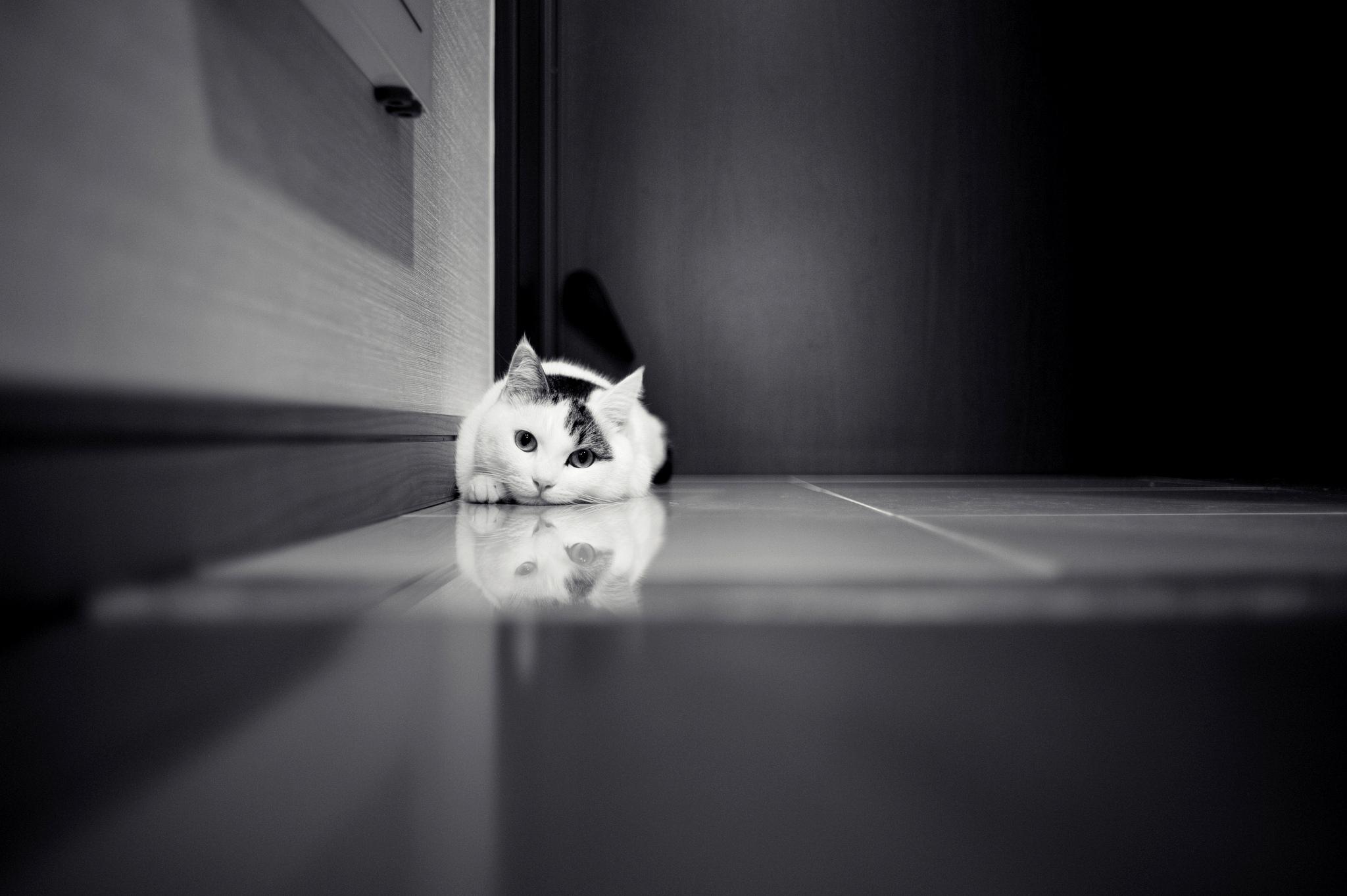 cat baby wallpaper