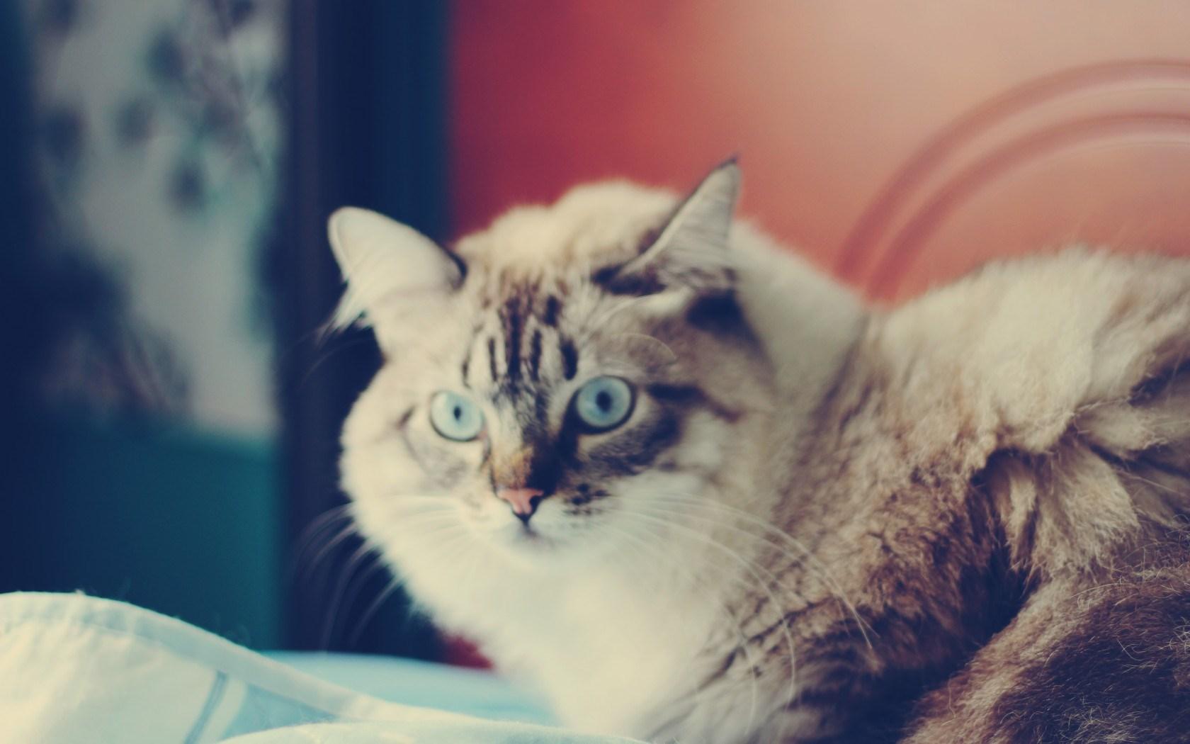 cat curious face