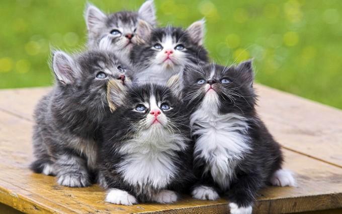 cat desktop wallpapers