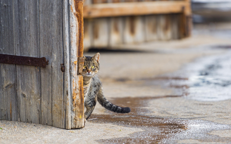 cat desktop wallpapers free download