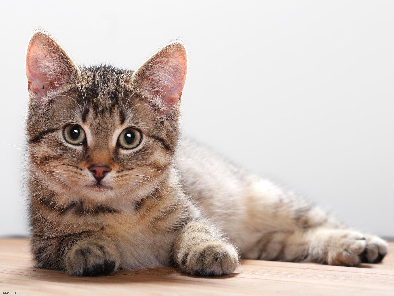 cat desktop