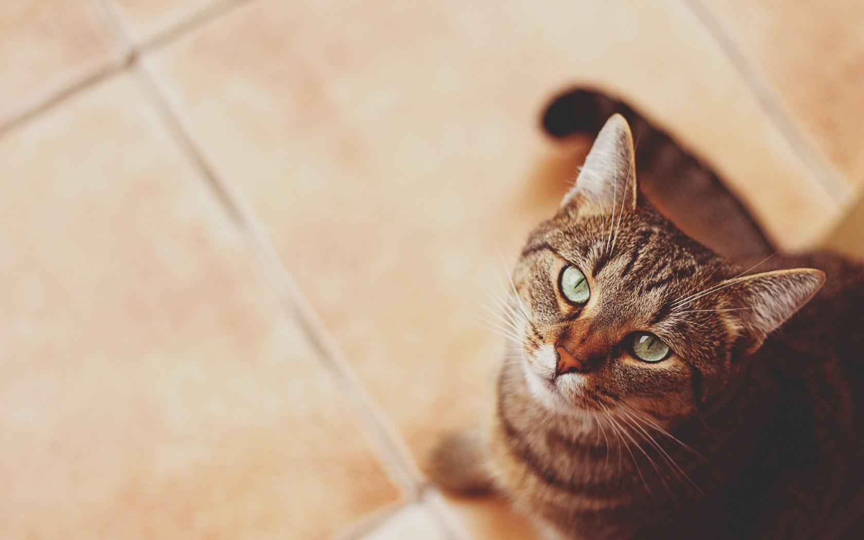 cat eyes cool