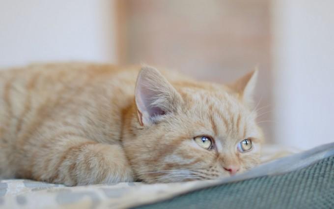 cat eyes ears