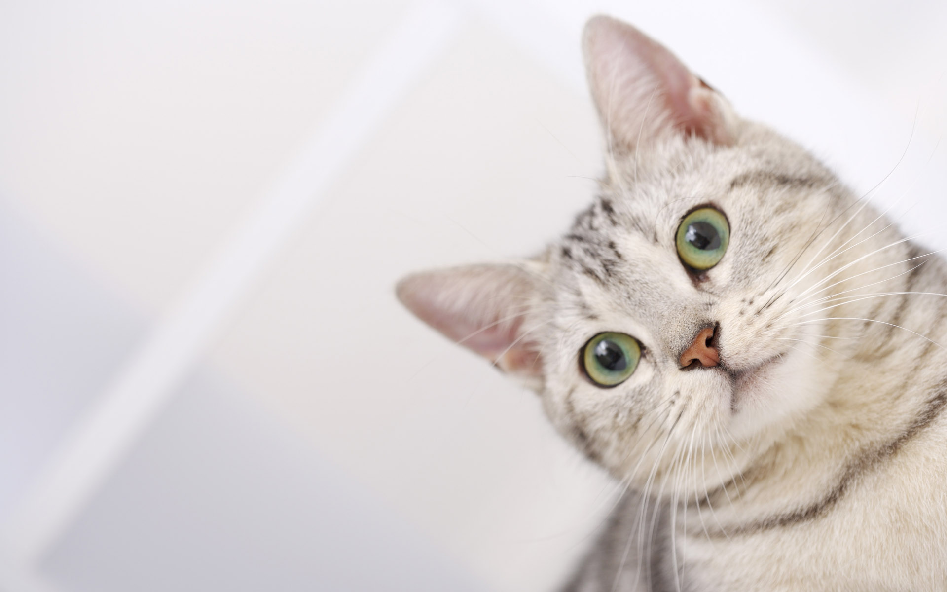 cat hd pictures