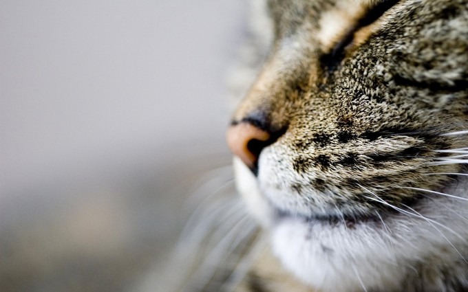 cat nose whiskers