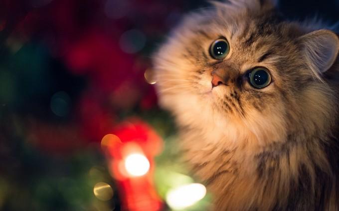 cat photos hd