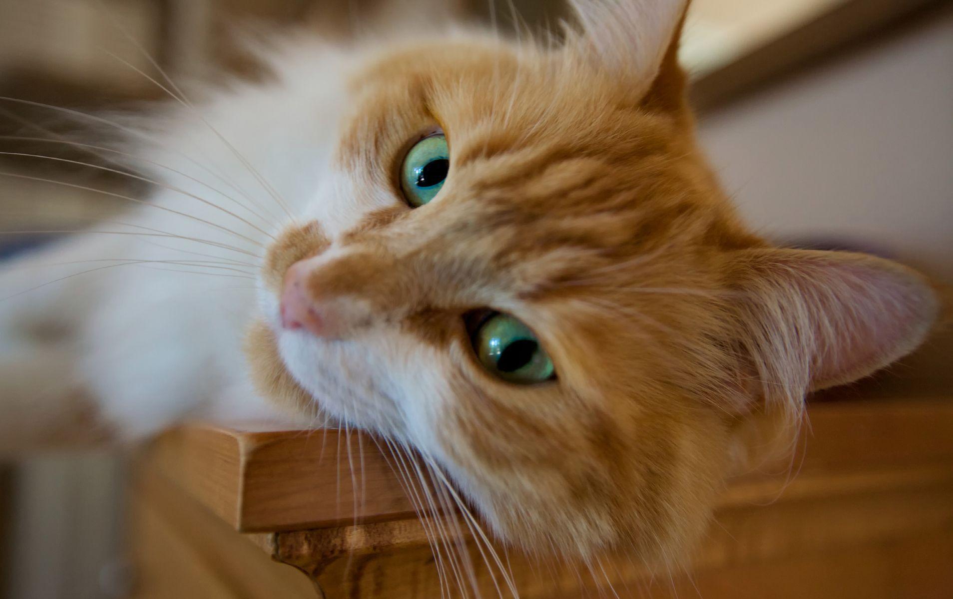 cat photos wallpaper