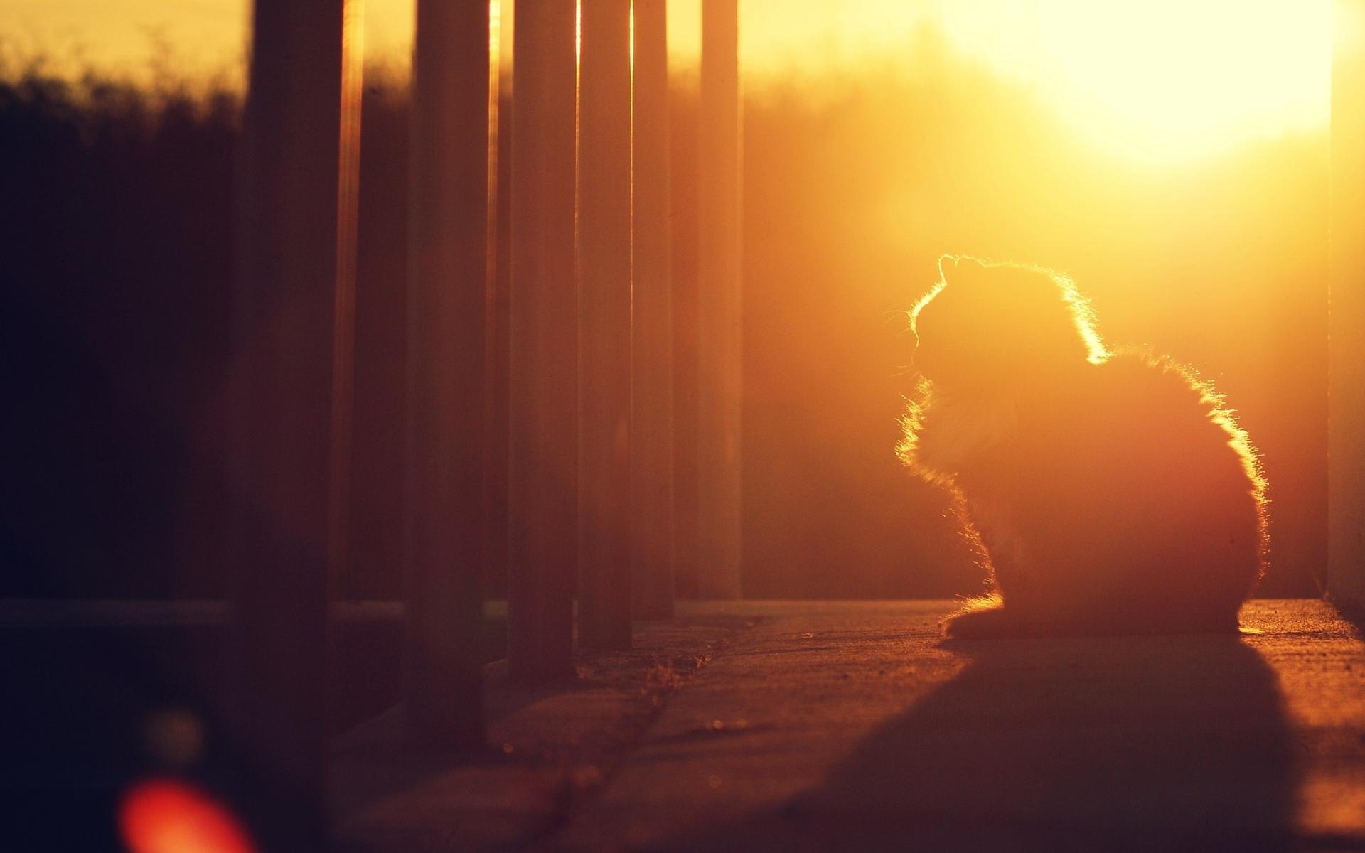 cat sunset