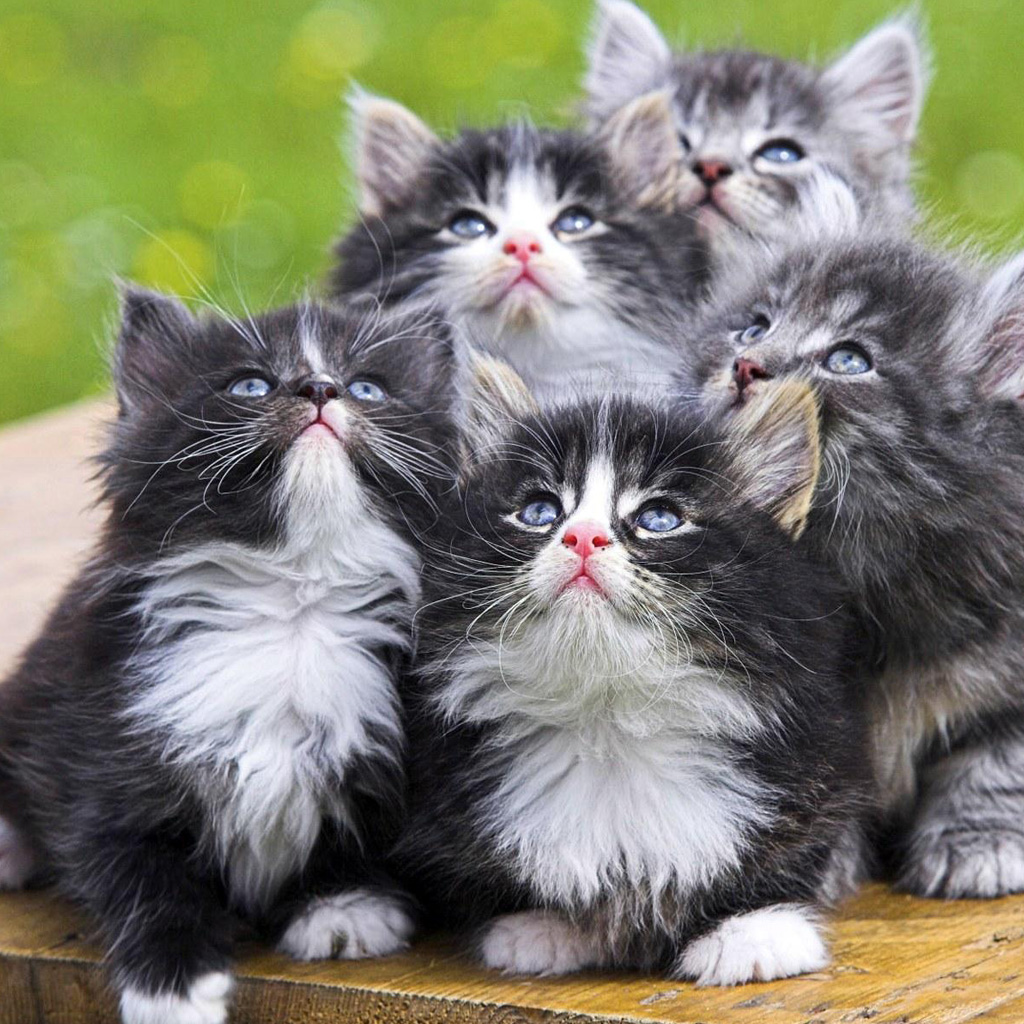 cats and kittens wallpapers