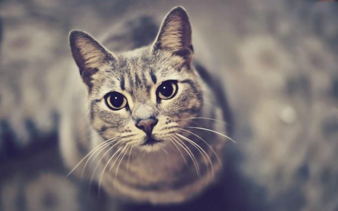 cats cute wallpaper