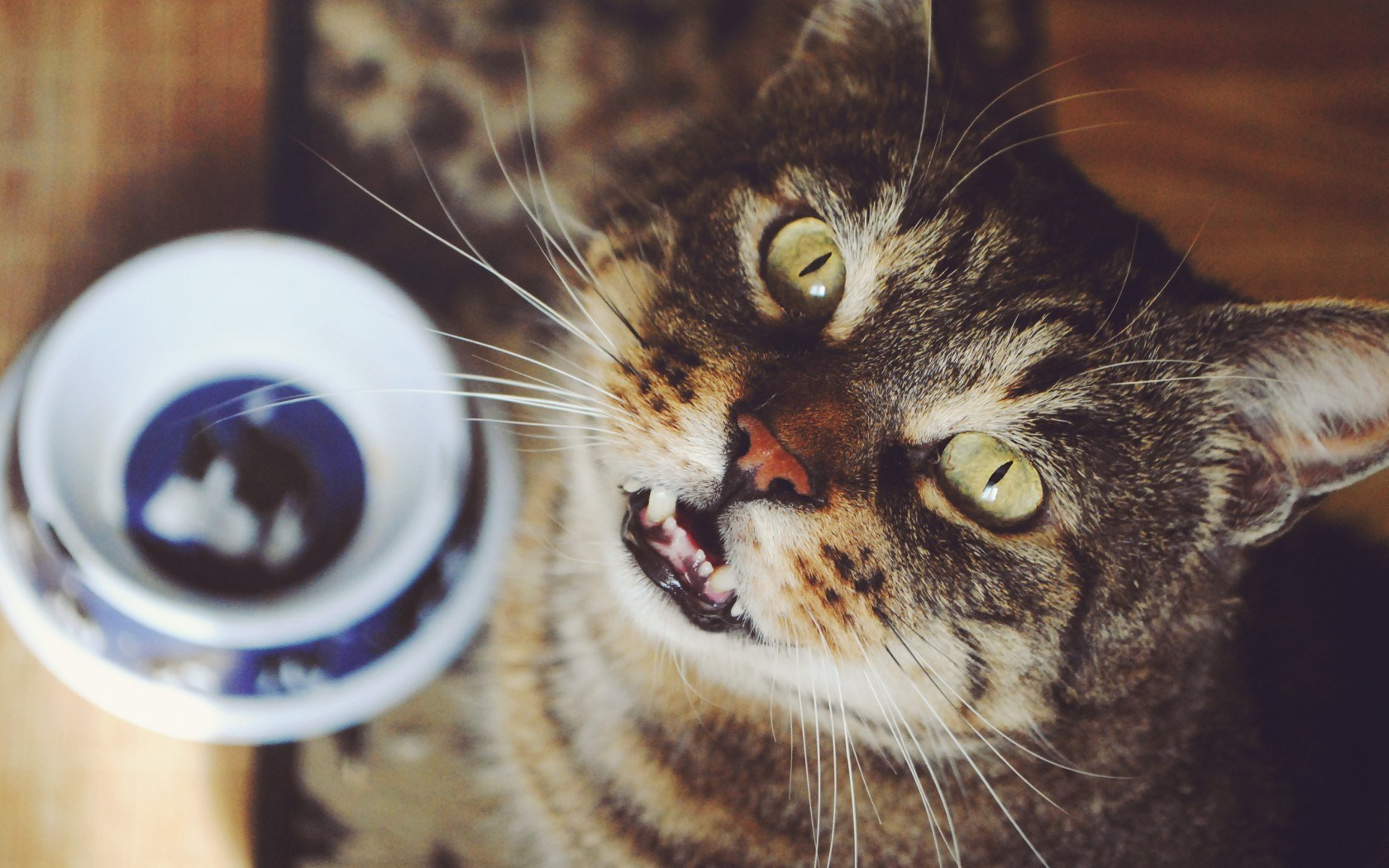 cats desktop wallpaper