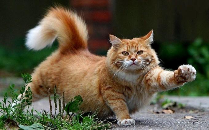 cats wallpaper free download