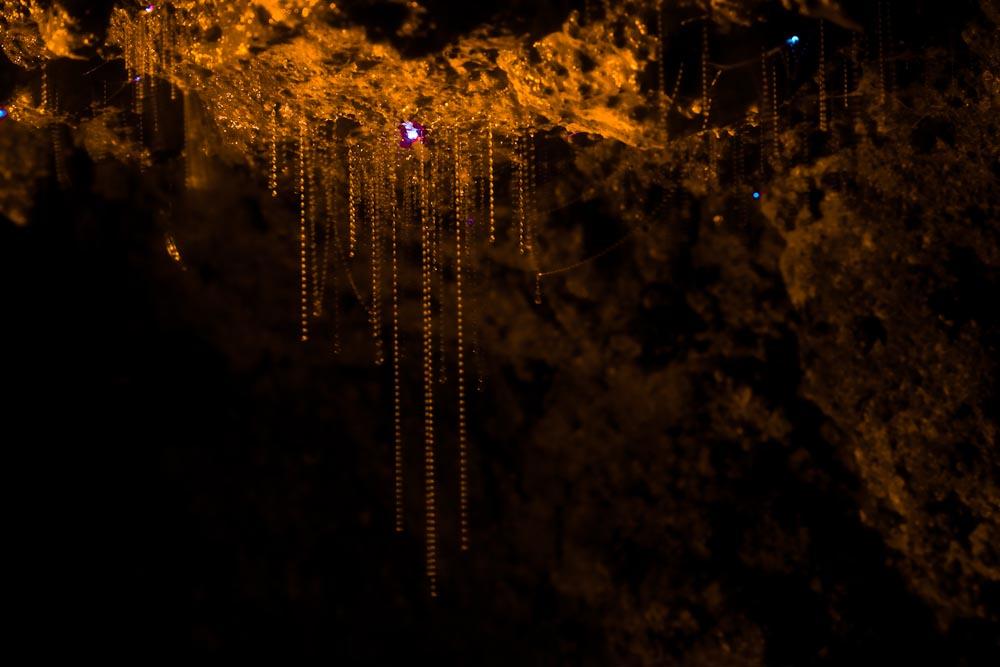 cave wallpaper glow worm