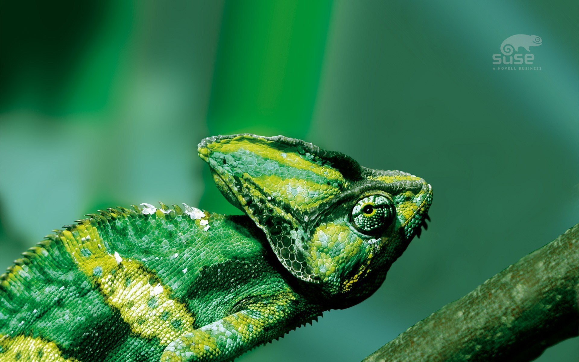 chameleon wallpapers widescreen