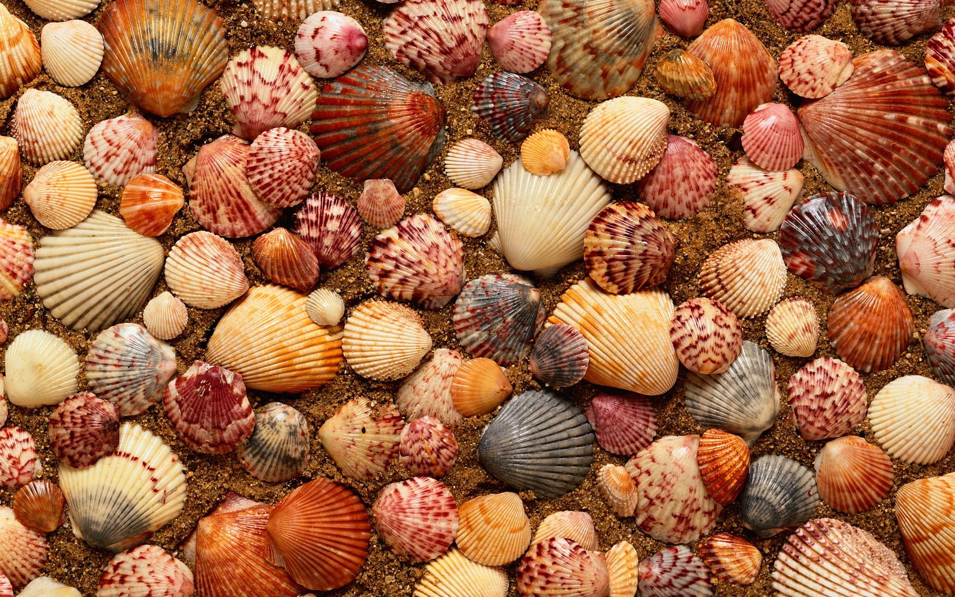 clams hd