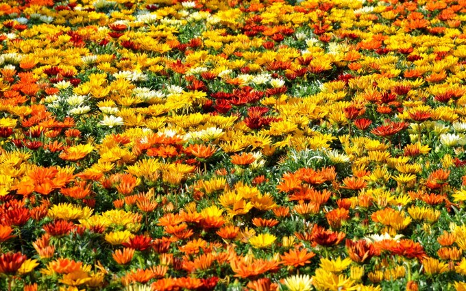 colorful summer flower field