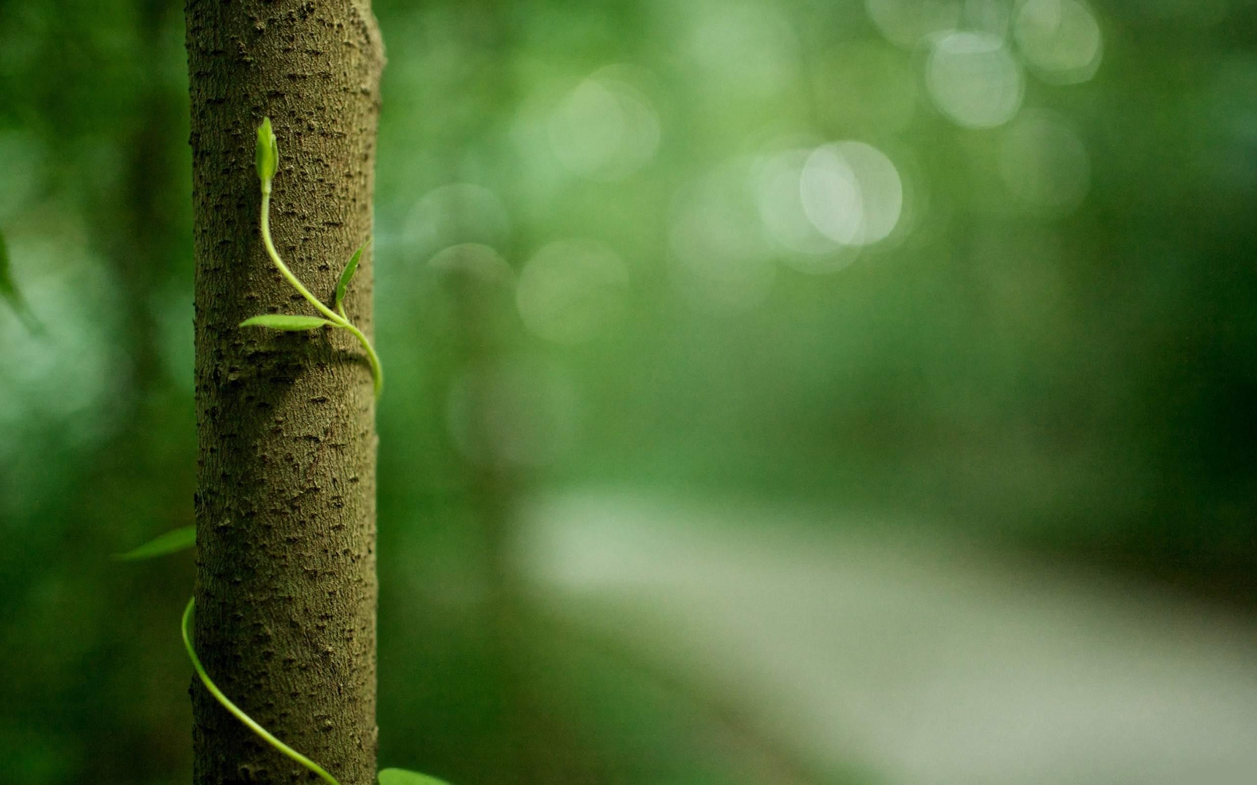 cool green tree