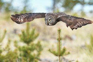 cool owl wallpaper