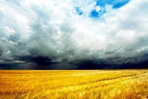 corn fields wallpaper