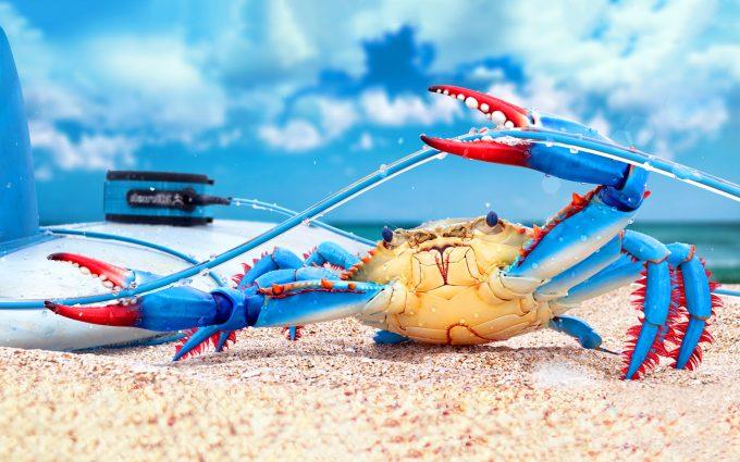 crab wallpaper download
