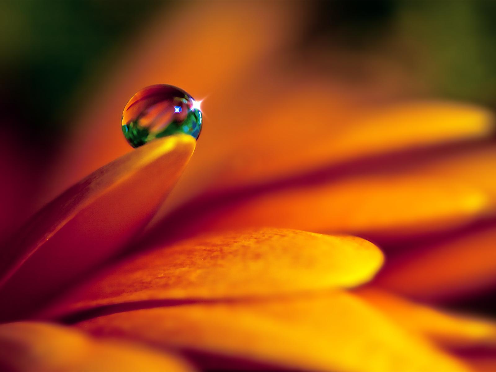 crystal dew drops
