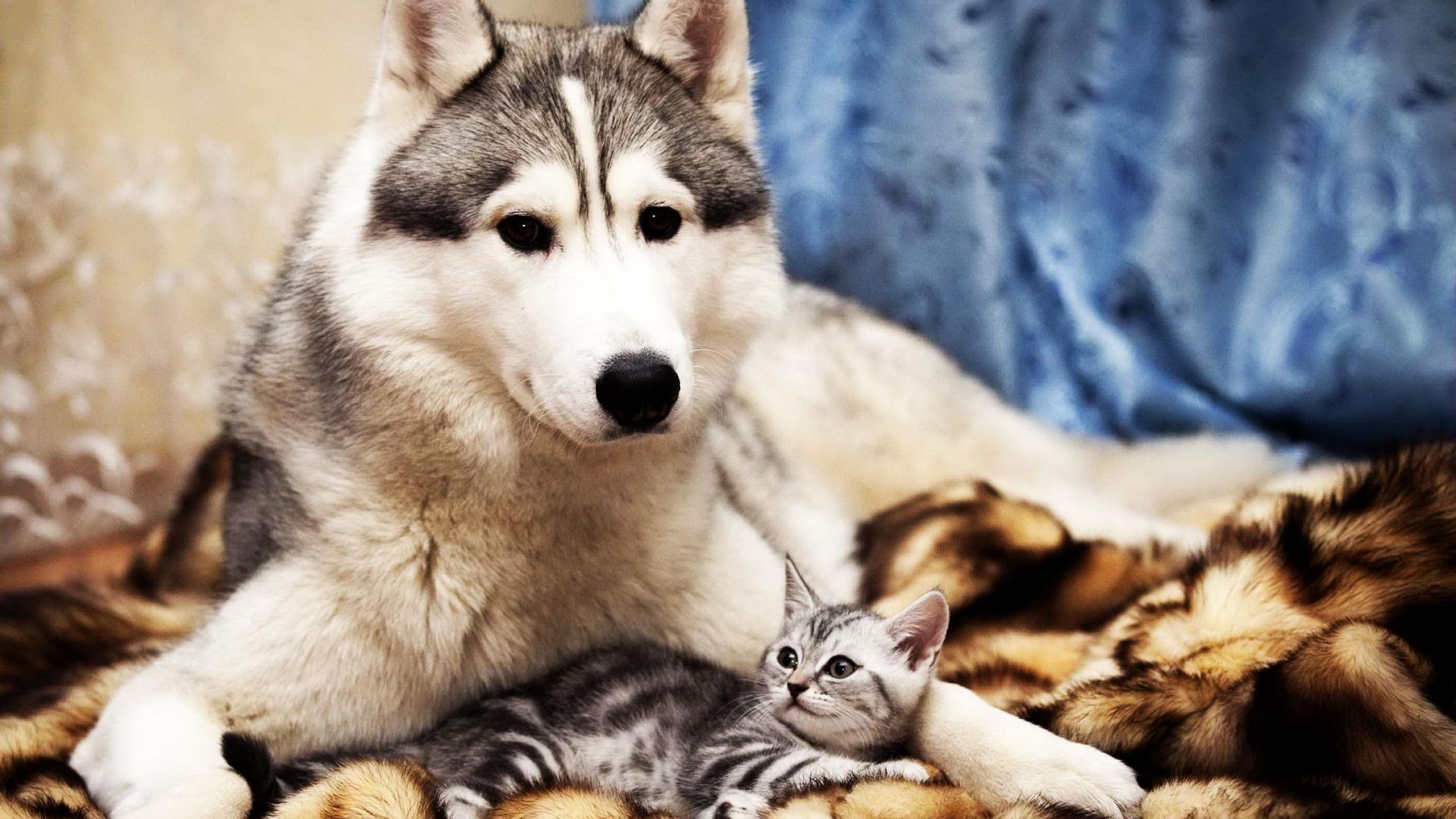 cute animals hd