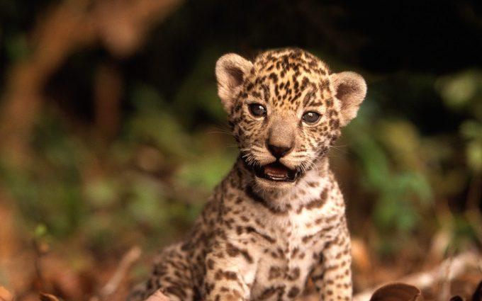 cute baby animal wallpaper
