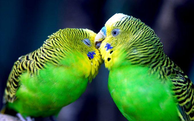 cute bird wallpaper A5