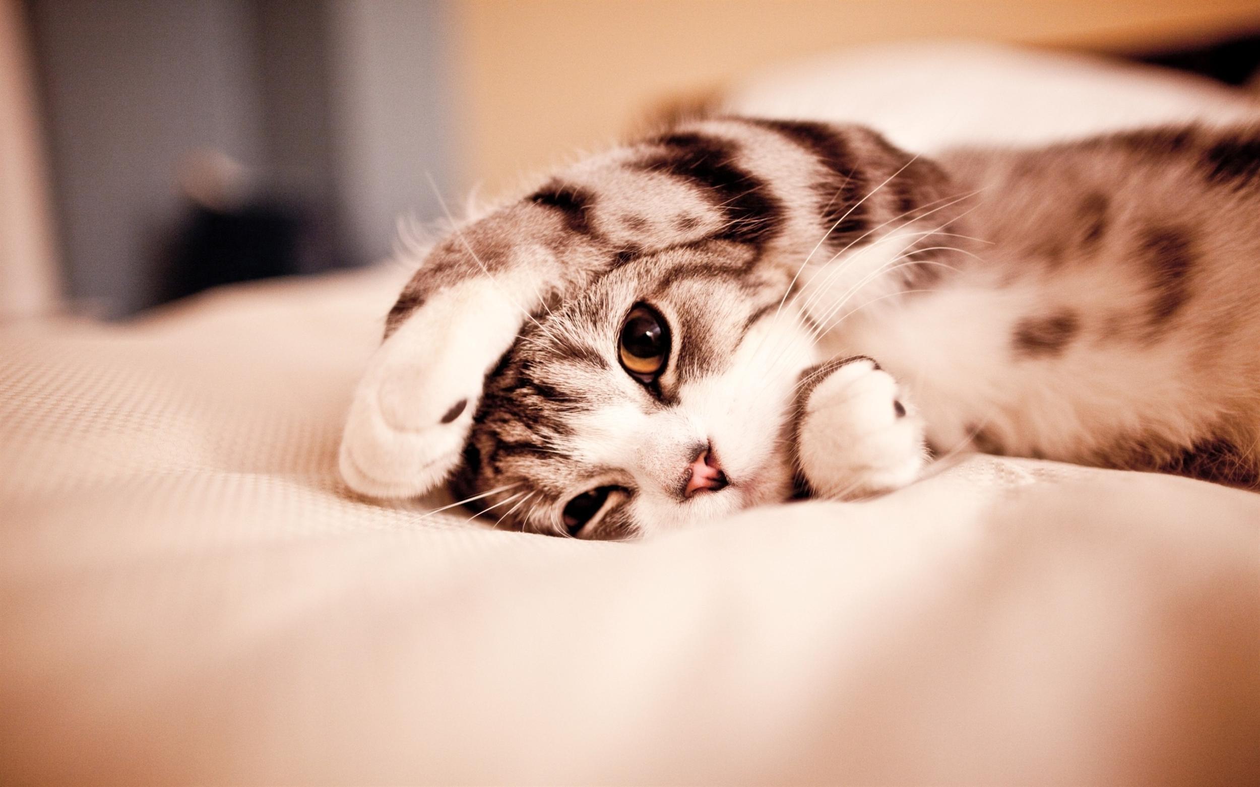cute cat wallpaper for desktop