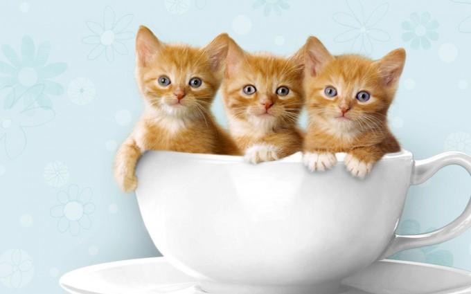 Cute Cat Wallpapers Free Download Hd Desktop Wallpapers 4k Hd