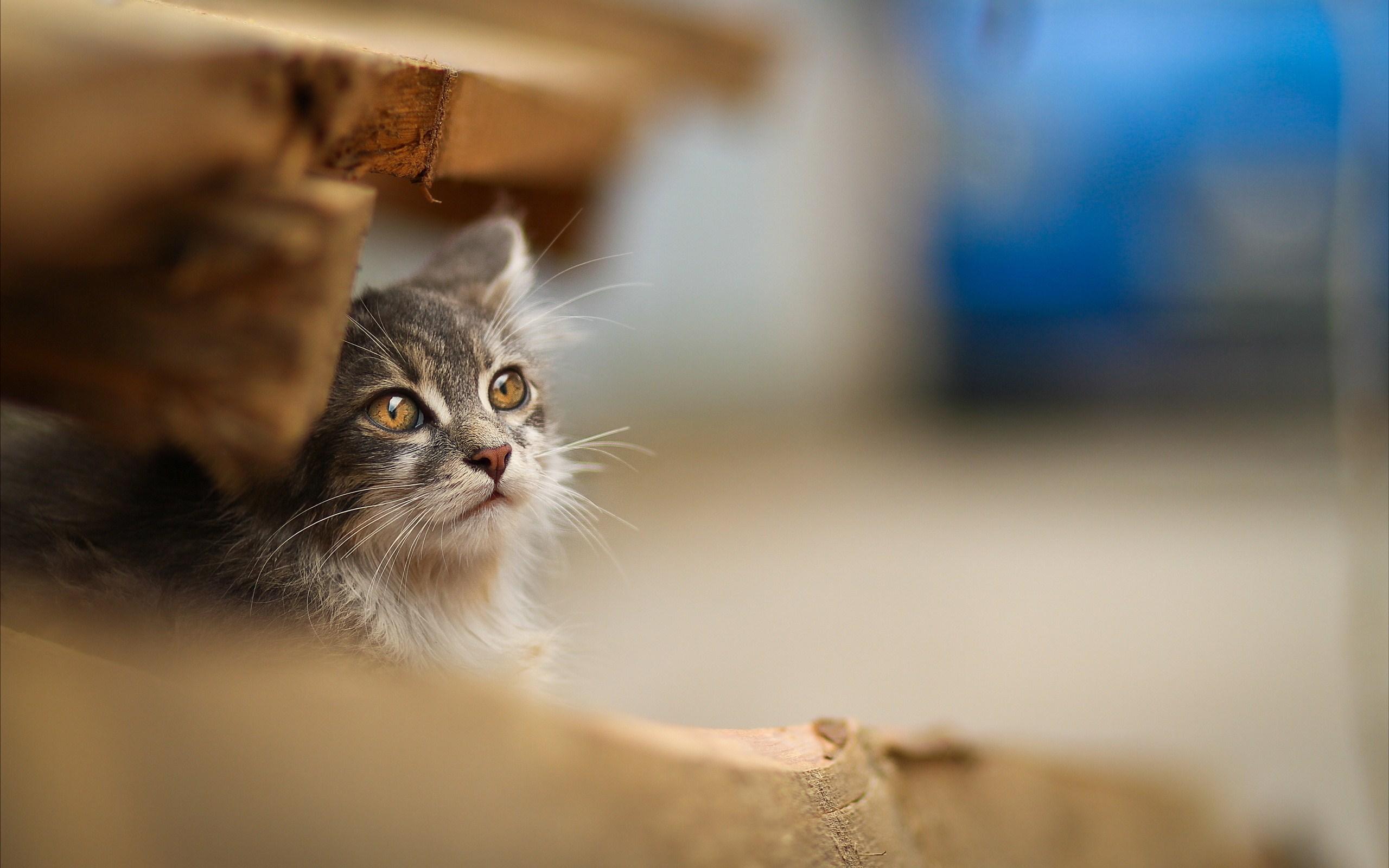 cute cats download - HD Desktop Wallpapers | 4k HD
