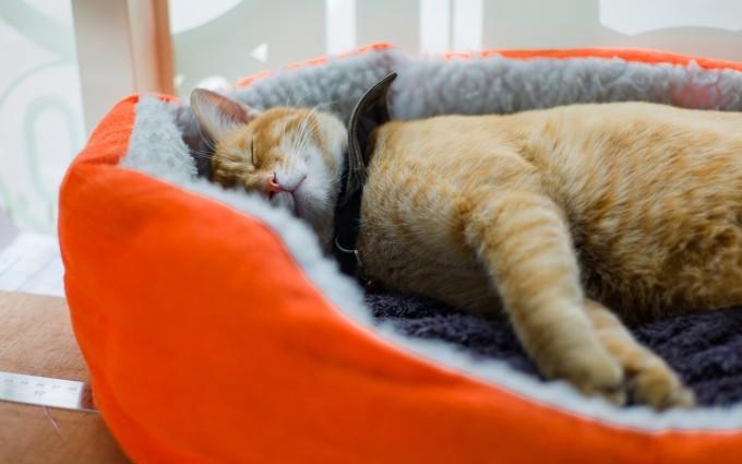 cute cats wallpaper free download