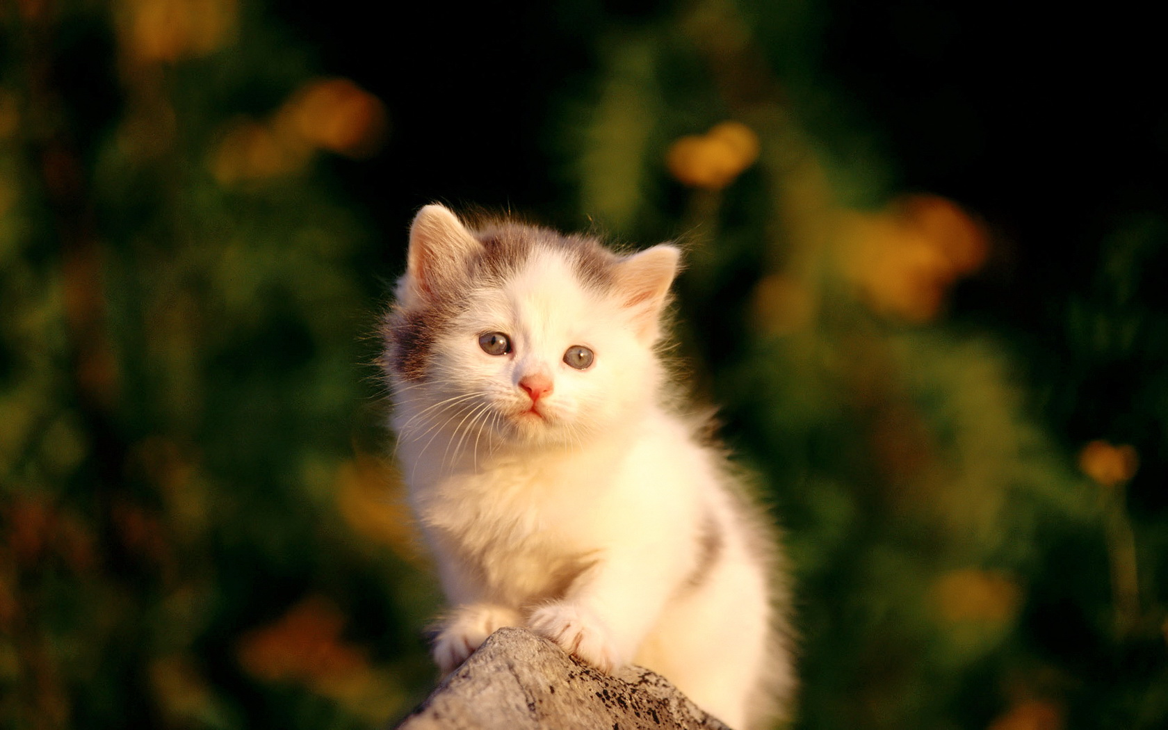 cute cats wallpapers free download