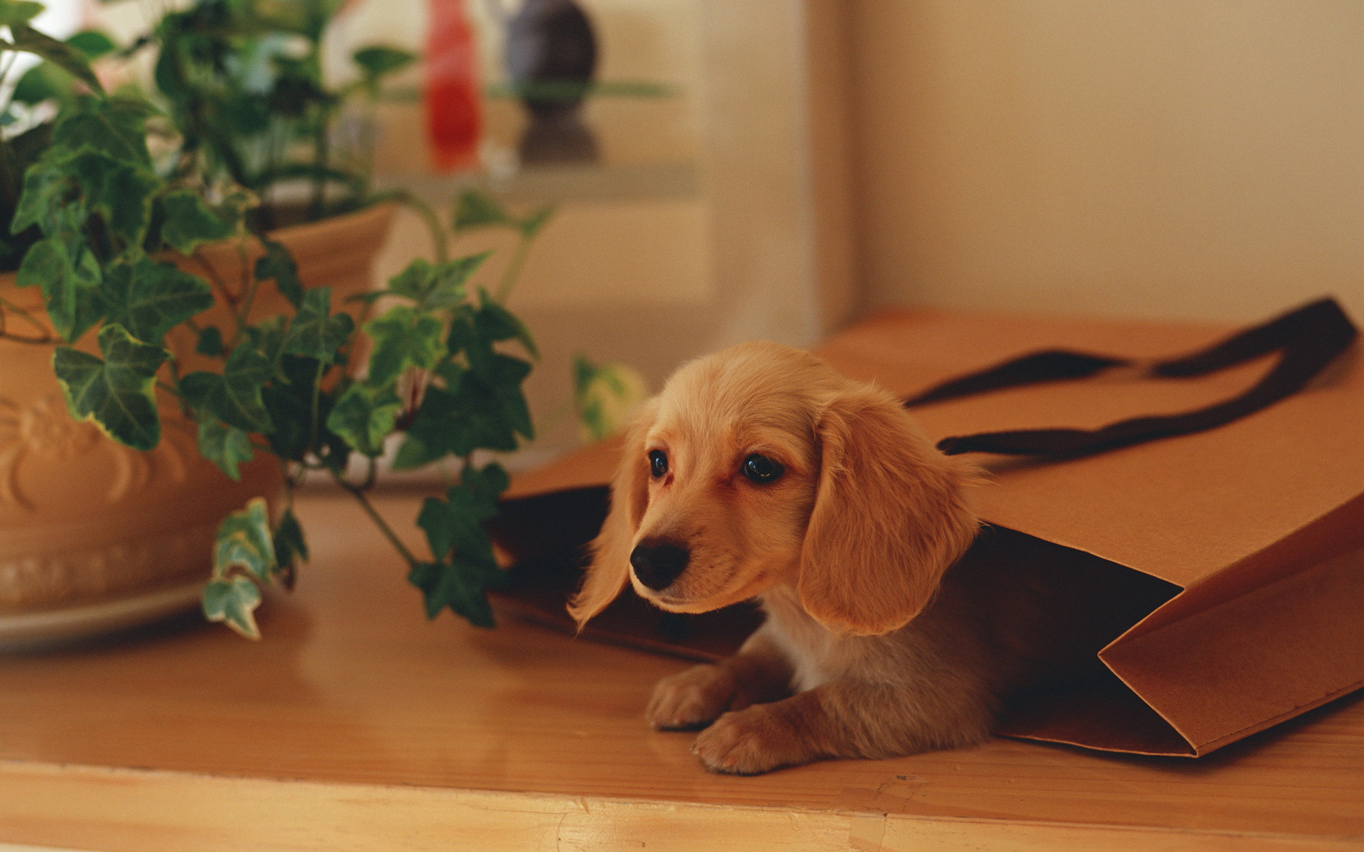 cute dog wallpapers free download