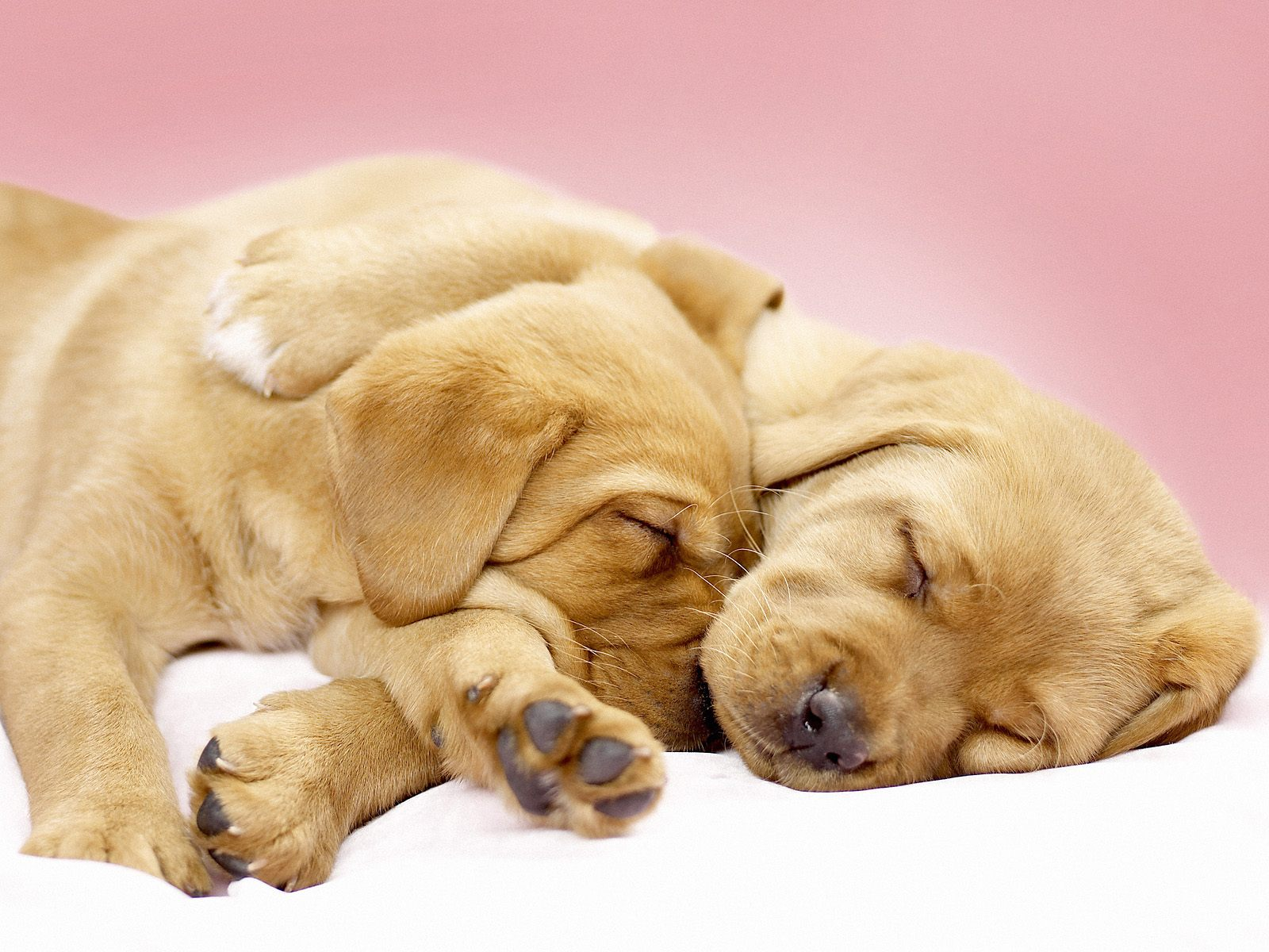 cute dogs images
