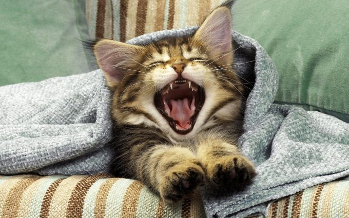 cute kittens wallpapers free download